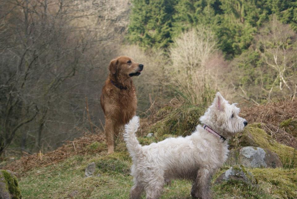 Explore the Brecon Beacons with your best friend!